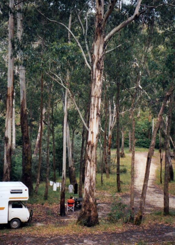 WaterfallsAlso know as Number 2 Creek Crossing, a campground near Avoca in Pyrenees State Forest. Thanks to <a href=\